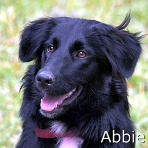 Abbie_TN2.jpg
