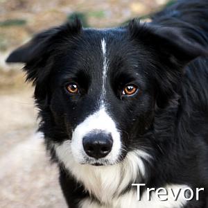 Trevor_TN01.jpg