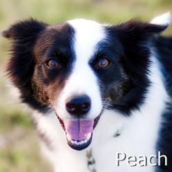Peach-TN.jpg