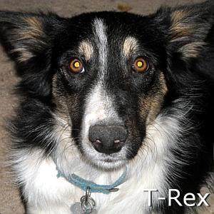 TRex_TN.jpg