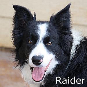 Raider_TN.jpg