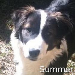 Summer_TN.jpg