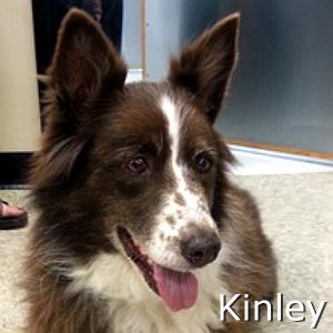 Kinley_TN.jpg