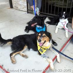 Hollywood Feed in Flower Mound 8-22-2015.jpg