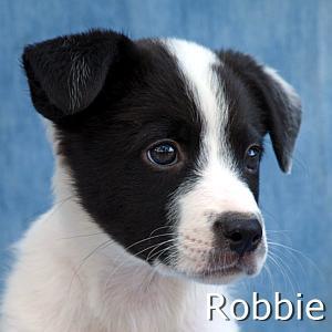 Robbie_TN.jpg
