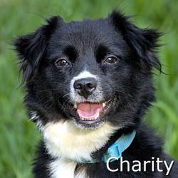 Charity_TN.jpg