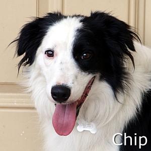Chip_TN.jpg