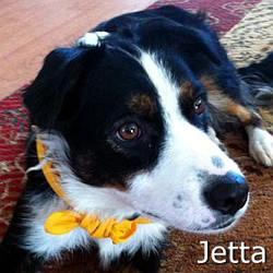 Jetta_TN.jpg