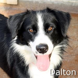 Dalton_TN.jpg