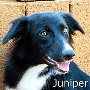 Juniper_TN.jpg