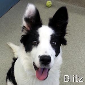 Blitz_TN.jpg