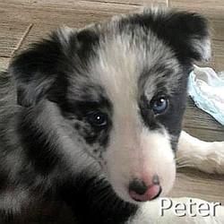 Peter-TN.jpg