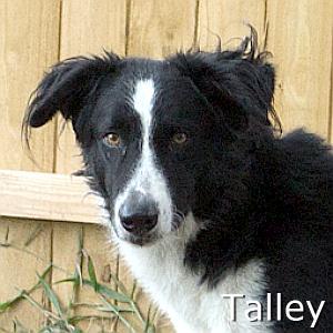 Talley_TN.jpg