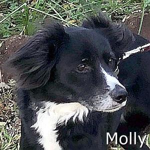 Molly-TN.jpg