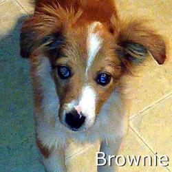 Brownie_TN.jpg