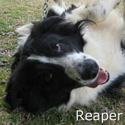 Reaper_TN.jpg