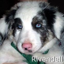 Rivendell_TN.jpg