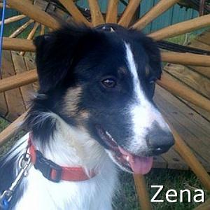 Zena_TN.jpg