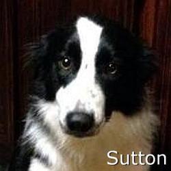 Sutton_TN.jpg