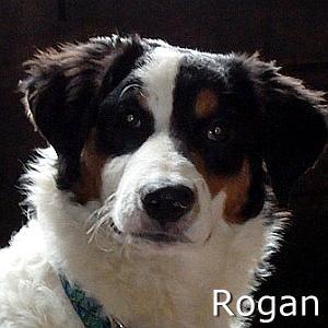 Rogan_TN.jpg