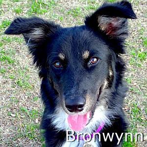 Bronwynn_TN.jpg