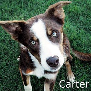 Carter_TN.jpg