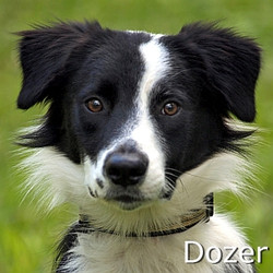 Dozer-TN.jpg