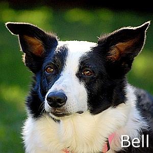 Bell-TN
