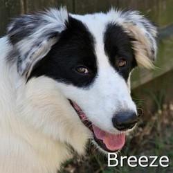 Breeze_TN.jpg