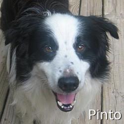 Pinto_TN.jpg