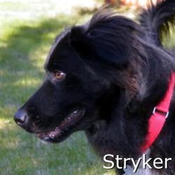 Stryker_TN.jpg