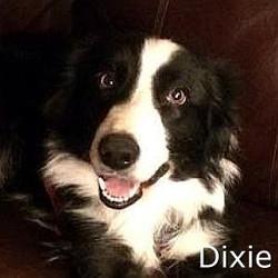 Dixie_TN.jpg