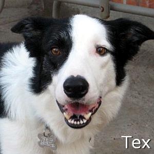 Tex_TN.jpg