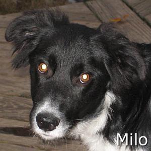 Milo_TN.jpg