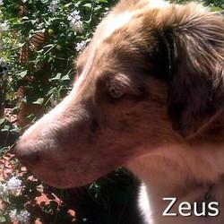 Zeus_TN.jpg
