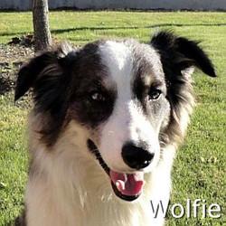 Wolfie_TN.jpg