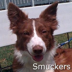 Smuckers_TN.jpg