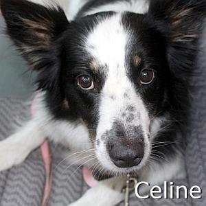 Celine_TN.jpg