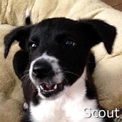 Scout2_TN.jpg