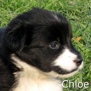 Chloe_TN.jpg