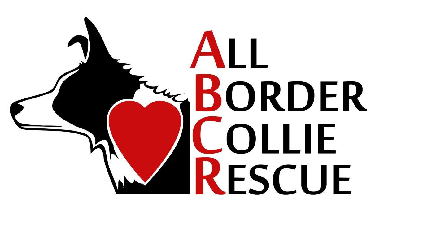All Border Collie Rescue  Border Collie Rescue  Texas Oklahoma