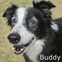 Buddy_TN.jpg
