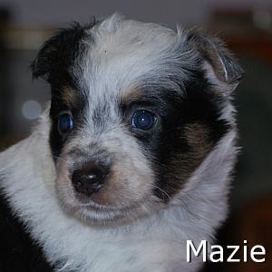 Mazie_TN.jpg