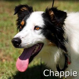 Chappie_TN.jpg