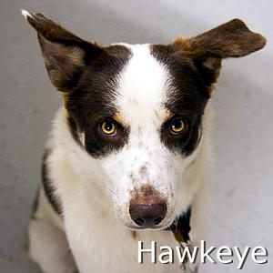 Hawkeye_TN.jpg