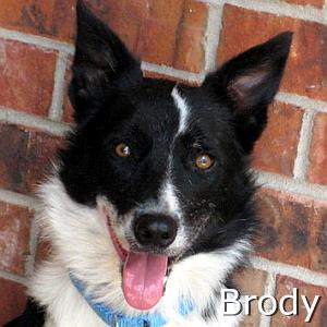 Brody_TN.jpg