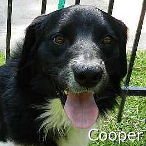 Cooper1_TN.jpg