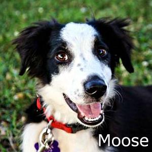 Moose_TN.jpg