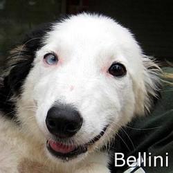 Bellini_TN.jpg