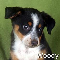 Woody_TN.jpg